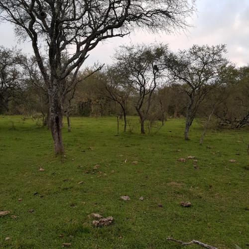 Vendo Campo 31 has Monte Crucecita Tercera Dt